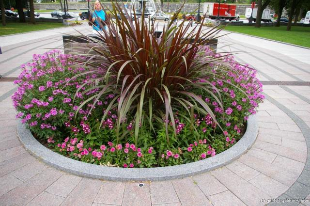 Plants in a circular garden area in front of the Quebec Parliament Building.jpg